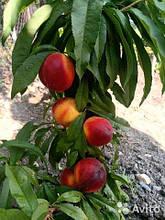 Колоновидный персик-нектарин Роман