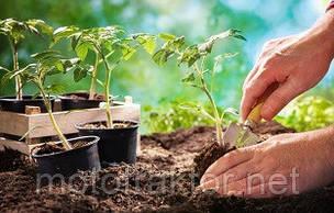 Советы по пересадке рассады в открытый грунт и уход за ней