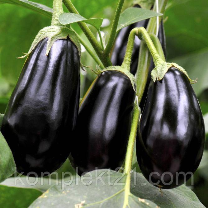 Семена Баклажан Гордита (1000 шт)