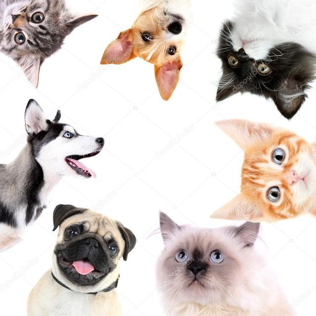 Сухий корм для собак та котів