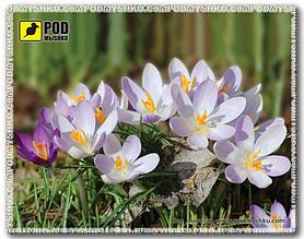 Килимок для мишки Pod Myshkou Весна-крокуси