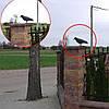 Ворон для отпугивания птиц, фото 3