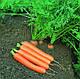 Морковь Дордонь F1, 5000 шт, Садыба Центр, фото 4