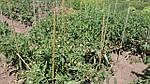 Опоры и колышки для цветов и растений  Ø 6 мм (0,5 метра), фото 3