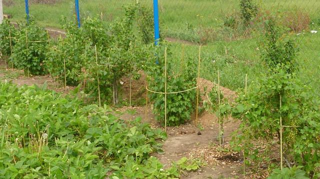 Кілочки для підв'язування низькорослих витких рослин, розсади Ø 7 мм (1 метр)
