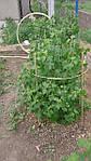Кілочки для підв'язування низькорослих витких рослин, розсади Ø 7 мм (1 метр), фото 5