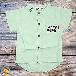 Детская рубашка с коротким рукавом Размер: 1,2,3,4 года (20278-2)