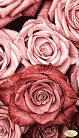 Пудровые розы.Схема под полную зашивку бисером.