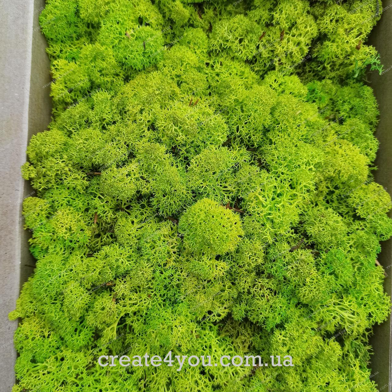Стабілізований Мох (ягель) світло-зелений 1 кг