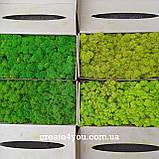 Стабілізований Мох (ягель) світло-зелений 1 кг, фото 4