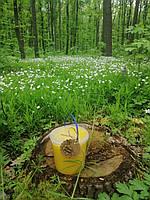 Мед натуральний лісове різнотрав'я 1л (1,4 кг)