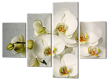 Модульна картина Білі орхідеї Код: 561.4 120 к.