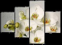 Модульная картина Белые орхидеи на белом 126x97см Код: W561M
