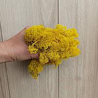 Жовтий Мох стабілізований (ягель) 500 г, фото 1