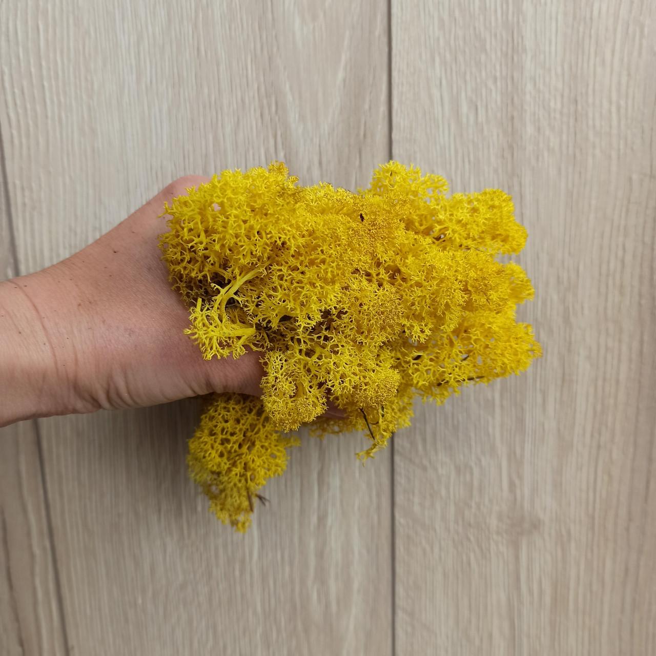 Жовтий Мох стабілізований (ягель) 500 г