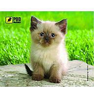 Коврик для мышки Pod Mishkou (Сиамский котик)