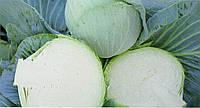 Капуста поздняя Новатор F1 100 семян, фото 1