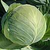 Капуста средне-поздняя Бригадир F1 100 семян