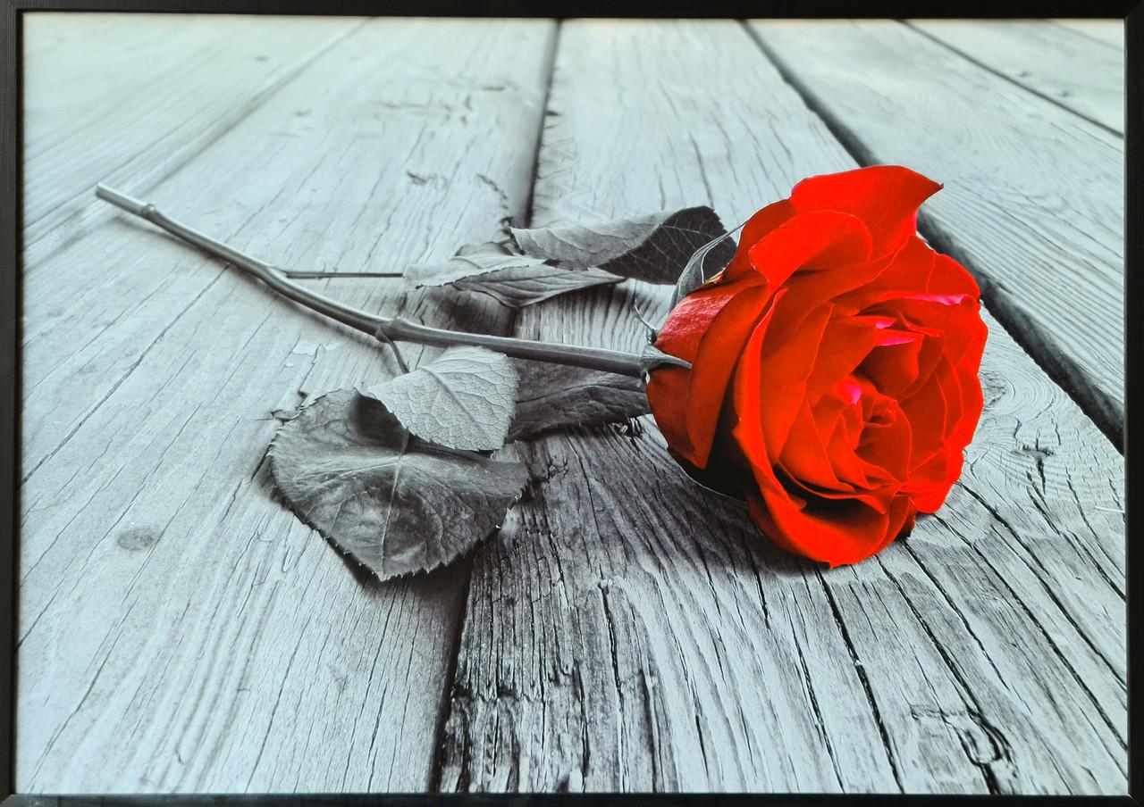 """Фотокартина в деревянной раме """"Rose 2"""", 70х100 см"""