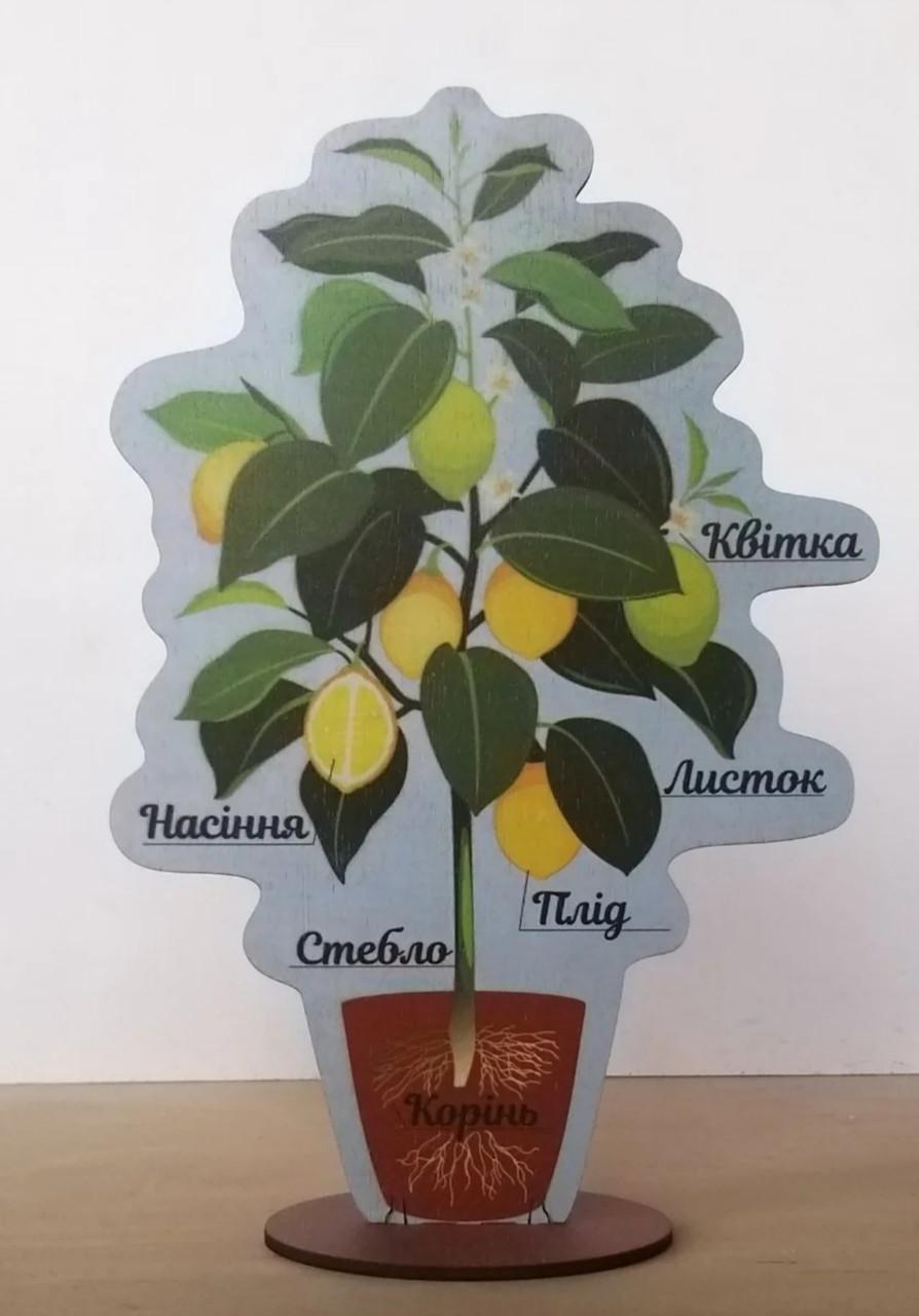 Модель будови рослини 20 см