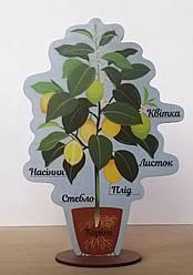 Модель будови рослин (на підставці) 20 см