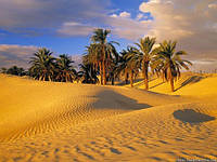 Caribbean World – лучшая сеть отелей Туниса для семейного отдыха!