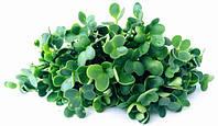 Семена капусты Кале 100г на микрозелень