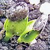 Все о выращивании подсолнечника