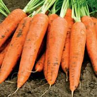 Флакко семена моркови тип флакке Италия Semenaoptom 10 г