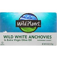 Wild Planet, Выловленные в диких условиях белые анчоусы в оливковом масле первого холодного отжима, 4,4 унц.(125 г)
