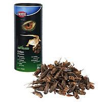Trixie (Трикси) Crickets Сушенные сверчки для рептилий 250 мл/25 гр