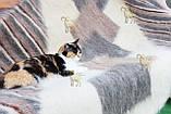 Лижник Карпатський плед з вовни кольорова Смужка, фото 5