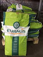 Евралис Белла семена подсолнечника Euralis насіння соняшника / імпортне насіння соняха Євраліс