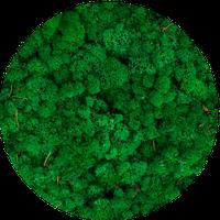 Мох ягель grass green. 100 ГРАММ