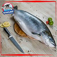 Тушка лосося с головой охлажденная 5-6 кг