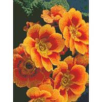 """Алмазная вышивка на холсте с подрамником, Цветы """"Примула оранжевая"""" 30*40 см, фото 1"""