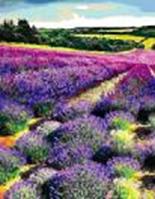 Картина за номерами Квітуче лавандове поле 35х45см Rosa 13442