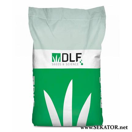 Газонна трава спортивна DLF Trifolium Плейграунд (Данія), фото 2