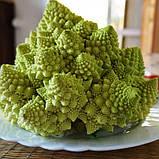Семена цветной капусты Вердоне F1, 1000 семян, фото 2