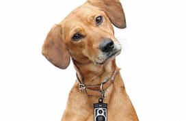 "Брелок для собак ""RollDog"""