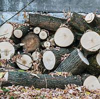 Доставка дров уже завтра