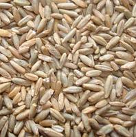 Жито органічне.