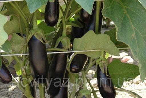Семена баклажана Дестан F1, 10 грамм