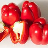 Семена перца Прокрафт F1, 500 семян, фото 2