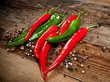 Семена горького перца Хайфи F1, 500 семян, фото 3