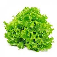 Салат листовой зеленый Бионда