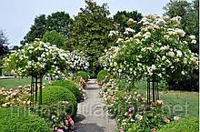 Опора садовая  Зонтик порошковая покраска (200х80см)