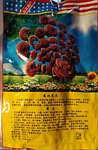 Уникальный гриб Ганадерма слайсы от рака (Рейши)