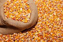 Кукуруза зерно (миним заказ 50 кг)