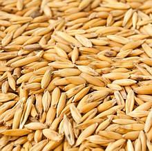 Овес зерно хв замовлення 50 кг